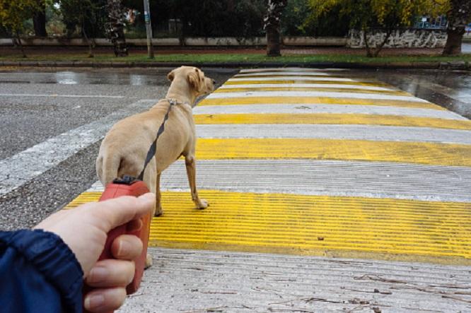 犬にリードに繋いでお散歩する画像
