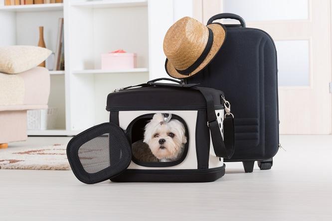キャリーバッグに入る犬とトランクケース