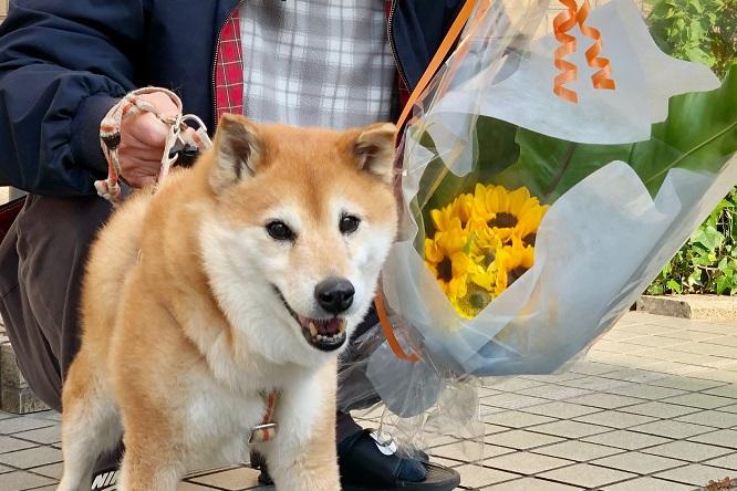 ひめちゃんと花束