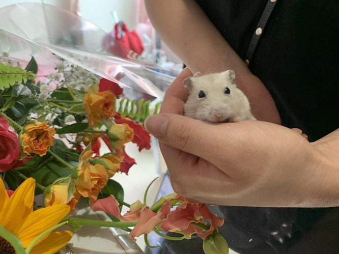 チャムちゃんと花束