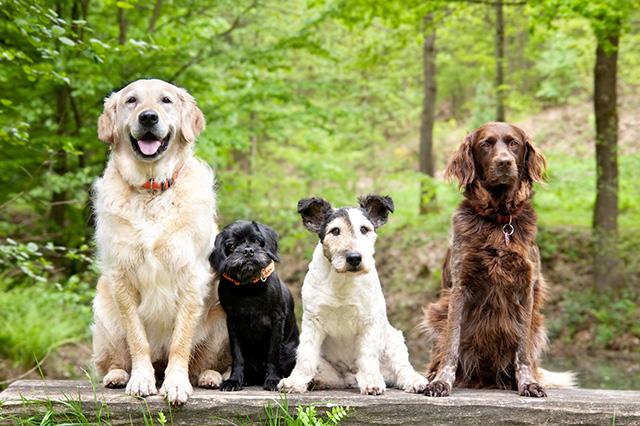 4頭の犬が並んだ 写真