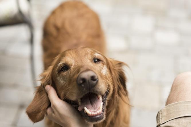 愛犬を撫でる画像
