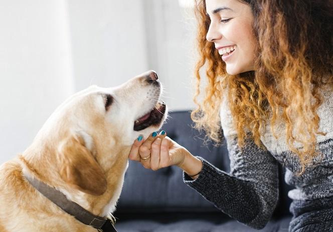 女性に顎を撫でられる犬