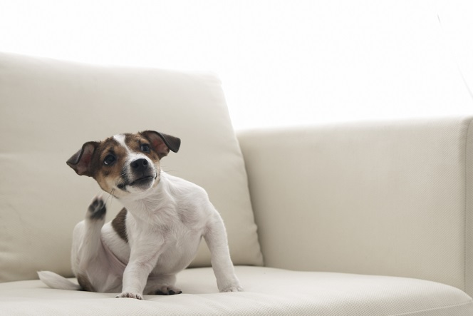 首を掻く犬