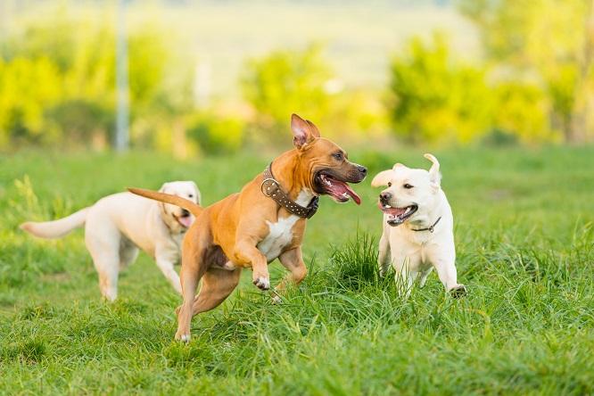 元気に走り回る犬たち