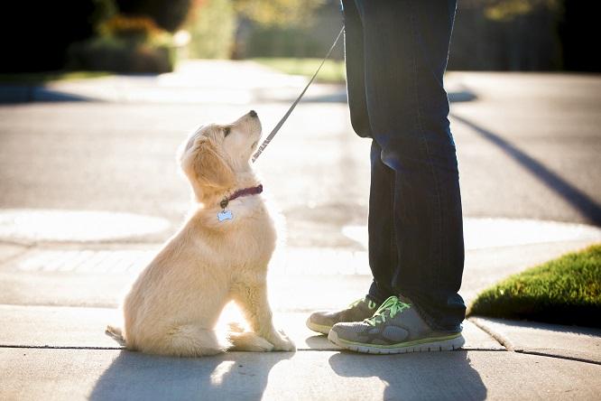 おすわりをする愛犬