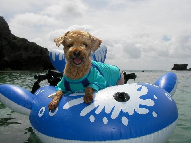 浮き輪にのって楽しそうなつぃちゃん