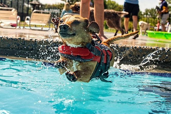 プールに飛び込む犬