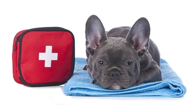 救急バッグとフレンチブルドッグ