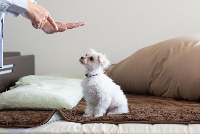 ベッドに乗った犬をしつける様子