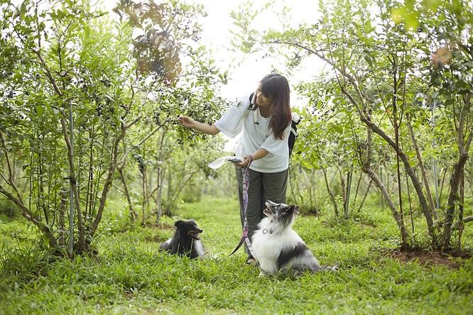 犬とブルーベリー狩り