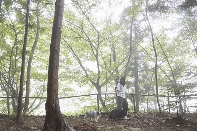 「森と湖のドッグパーク」をお散歩