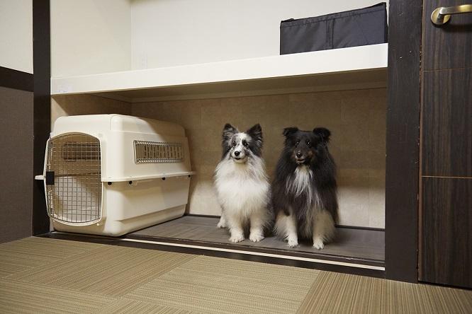 板室別邸のお部屋の犬スペースの中のシンディとメロディ