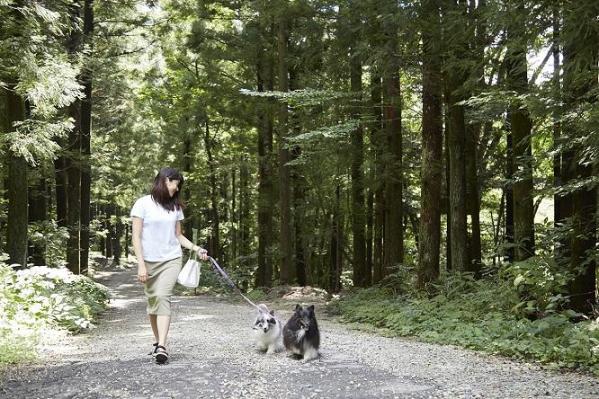 朝のお散歩をするシンディとメロディ