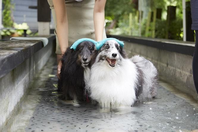 温泉に入るシンディとメロディ