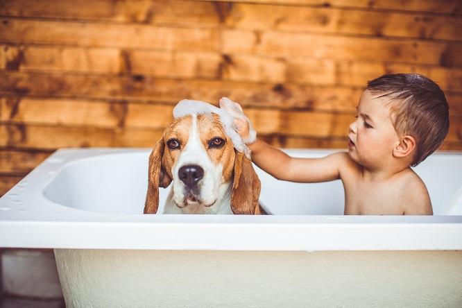 バスタブに入った子供と犬