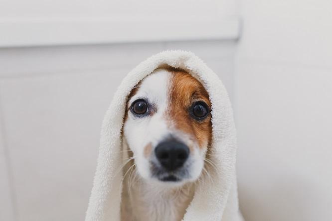 タオルに包まれた犬