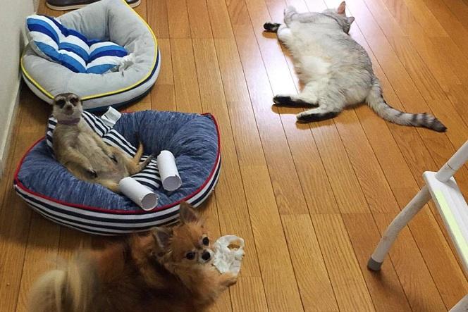 ミーアキャットと犬と猫