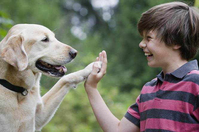 ハイタッチをする少年と犬