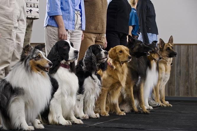列に並ぶ種類の違う犬