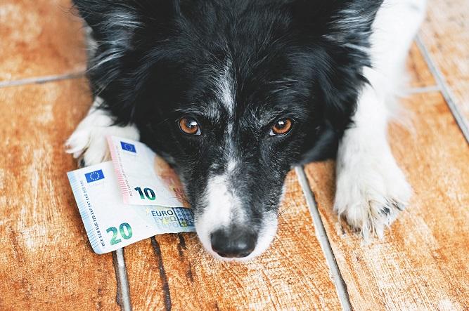 お札を咥える犬