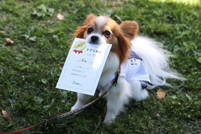 きずな検定に参加して認定書をくわえる犬