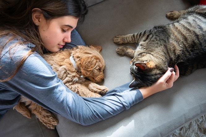 猫と犬とヒト