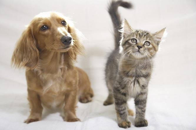 子犬と子猫の画像