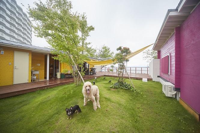 芝の上でカメラ目線の犬2頭