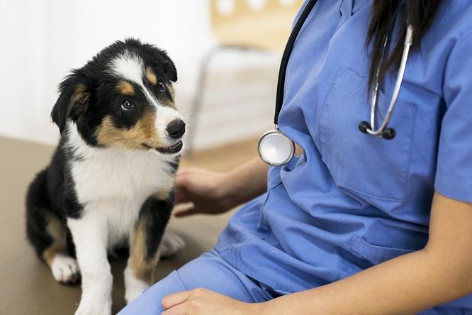 獣医師を見つめる子犬