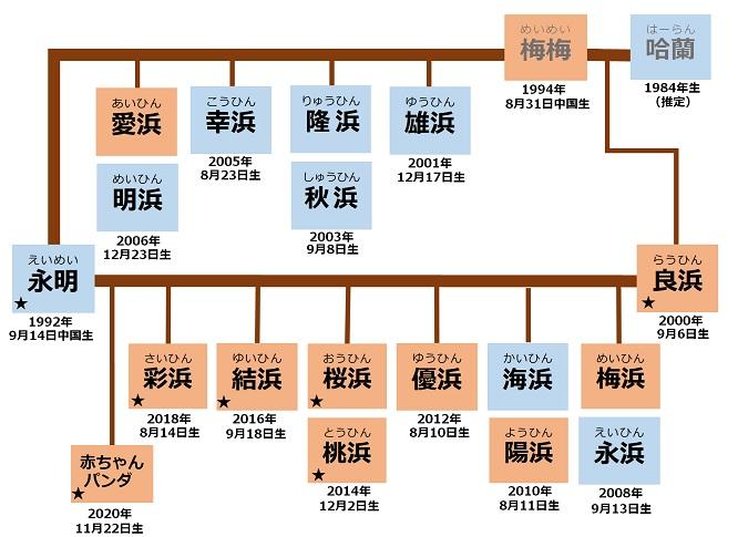 パンダファミリーの家系図