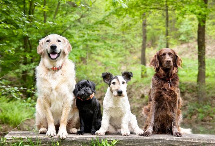 さまざまな犬種が並んでいる様子