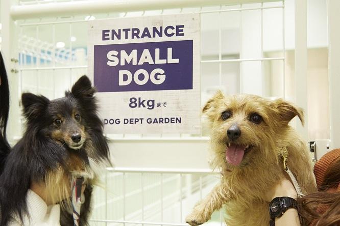 小型犬エリアの看板と犬2頭