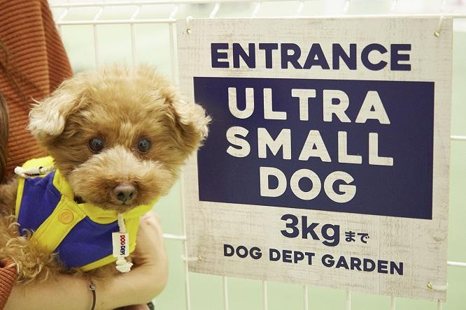 超小型犬エリアの看板と犬