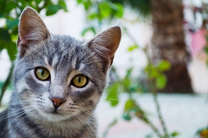 正面を見ている猫の画像