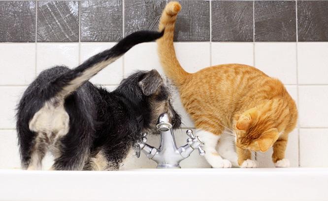 蛇口で水を飲もうとしている犬と猫