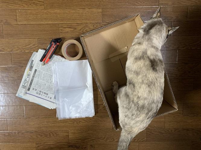 猫トイレを使う様子