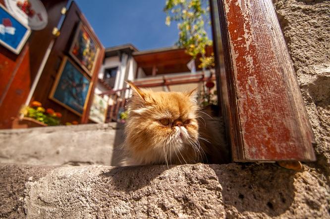家の階段に座る猫