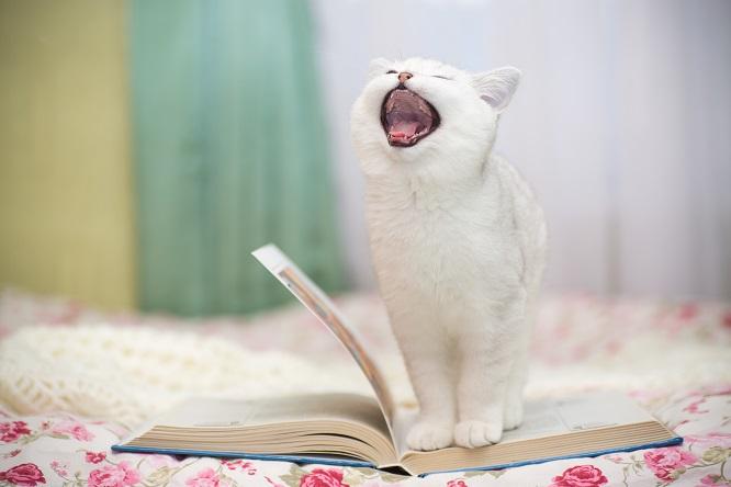 口を開けて鳴いている子猫