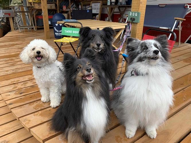 うれしそうなくろまめ一家の犬4頭