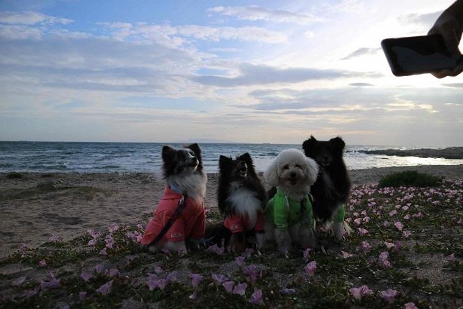 海の花畑で犬の写真を撮影する様子