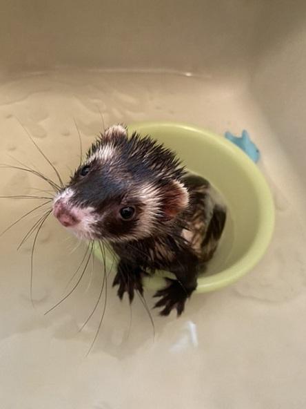 シャワーより ボクはお風呂派 いい湯だな