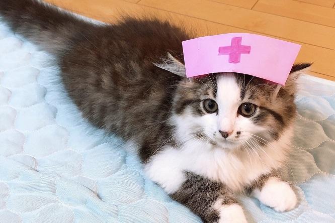 猫の手も 貸せるかしらと スタンバイ