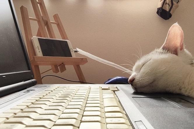 お猫様 仕事はいつも ネルワーク