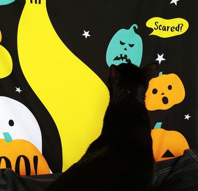 ハロウィンの世界に浸る黒猫