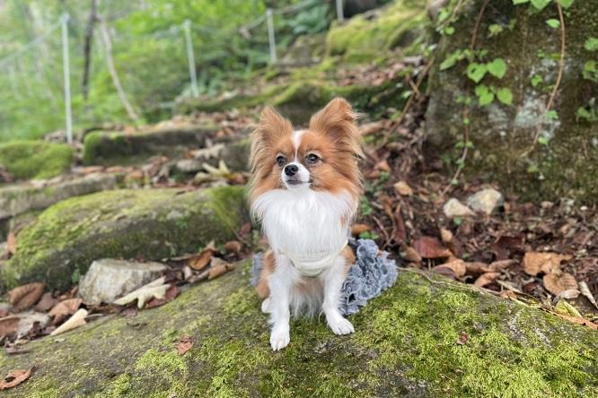 森林浴する犬
